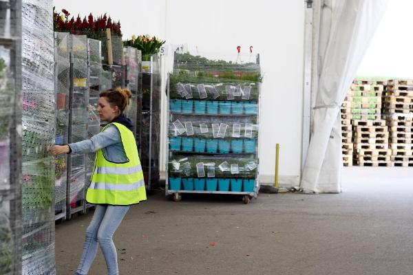 Blandine décharge son camion et trie la marchandise en fonction des départements sur le quai.